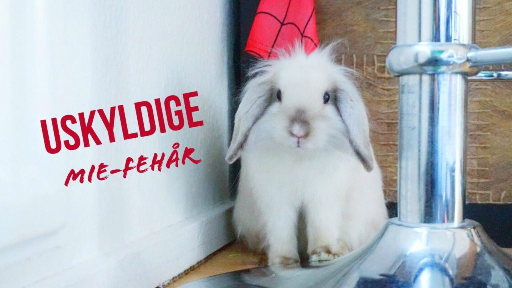 SÅ for kaninen!