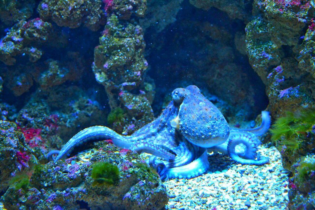 Blæksprutten, et indblik i en flergangs fødendes kvindes anus