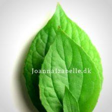 JoannaIzabelle